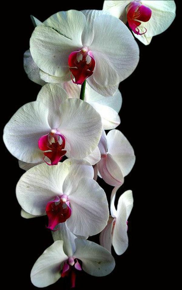 orchideen hawaii orchidee garten pflanzen