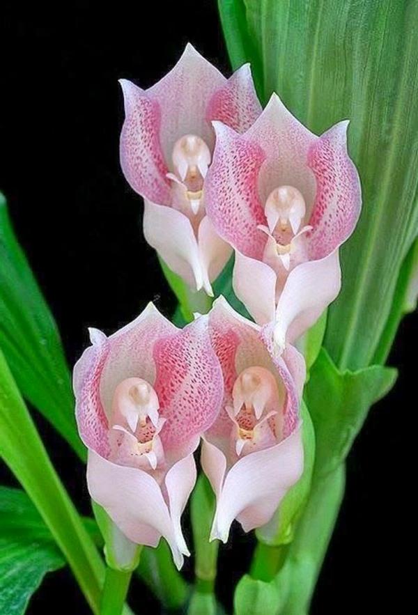 orchideen angels orchid schöne dekoideen
