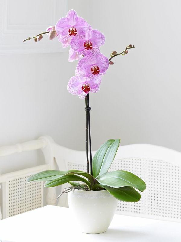 orchideen schön elegant sanft blumen
