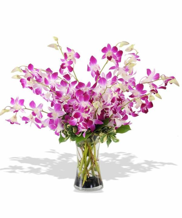 orchideen arten dendrobium orchid lila