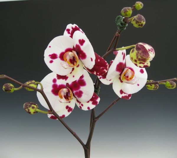 orchideenarten weiß rot blüten schöne dekoideen