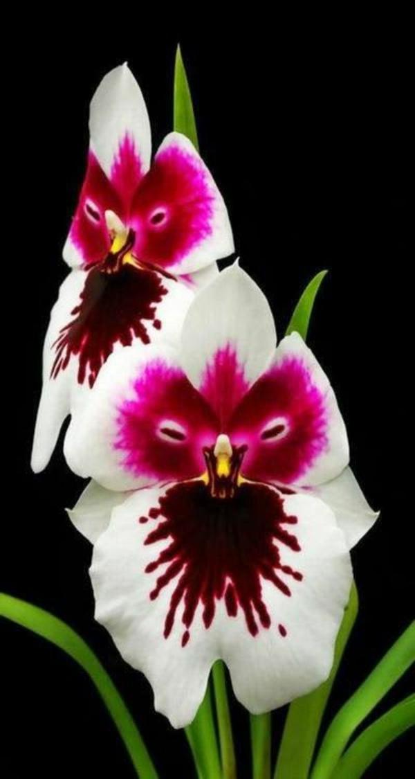 orchideen schöne dekoideen weiß rosanuancen