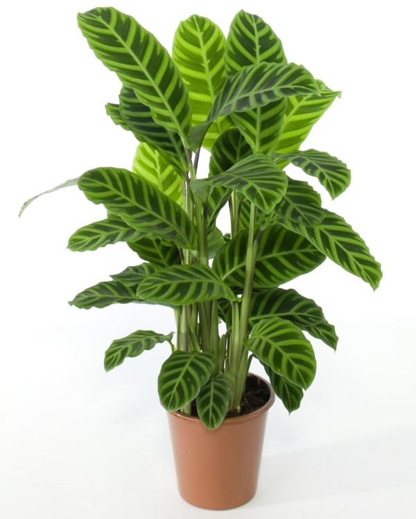 pflanze pflegeleicht schöne blätter brauner pflanztopf