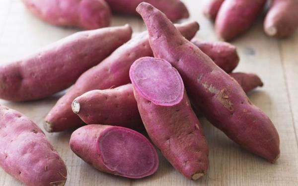 kartoffel lila wurzeln