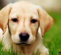 Schöne Hunderassen, in die Sie sich verlieben werden!