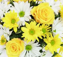 Die Blumen Symbolik auf einen Blick – Die Blumen näher kennenlernen