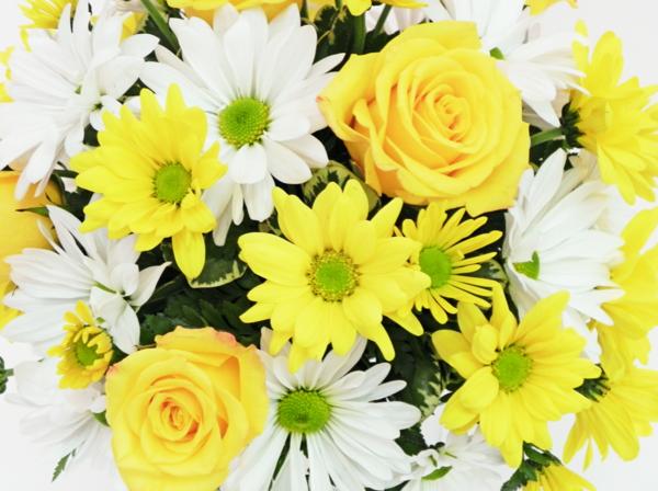 symbolik blumen gelbe rosen weiße gänseblümchen
