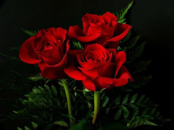 symbolik blumen rote rosen heiße liebe