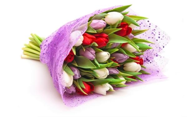 tulpen blumenstrauß weiß lila rot
