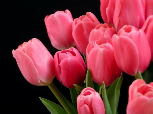 tulpen garten pflanzen schöne dekoideen