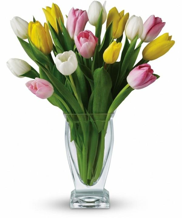 tulpen untzerschiedliche farben vase