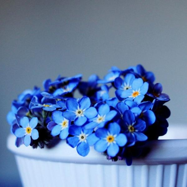 vergissmeinnicht blau treue bdeutung pflanzen