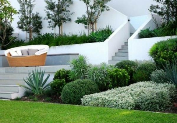 vorgarten design schön immergrüne pflanzen anordnung