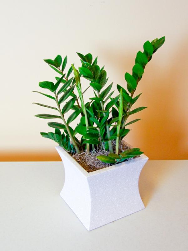 moderne zimmerpflanzen als frische deko f rs zuhause frisch mobel. Black Bedroom Furniture Sets. Home Design Ideas