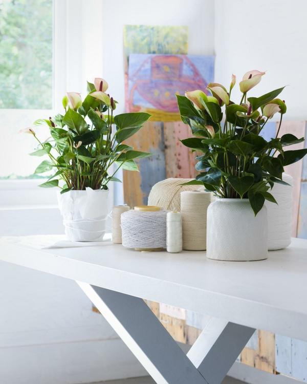 zimmerpflanzen bestimmen grüne blätter weißer tisch