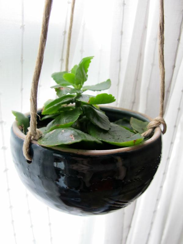 zimmerpflanzen bestimmen hängelampel weiße gardinen