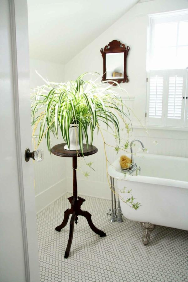 zimmerpflanzen bestimmen pflanze badezimmer badewanne