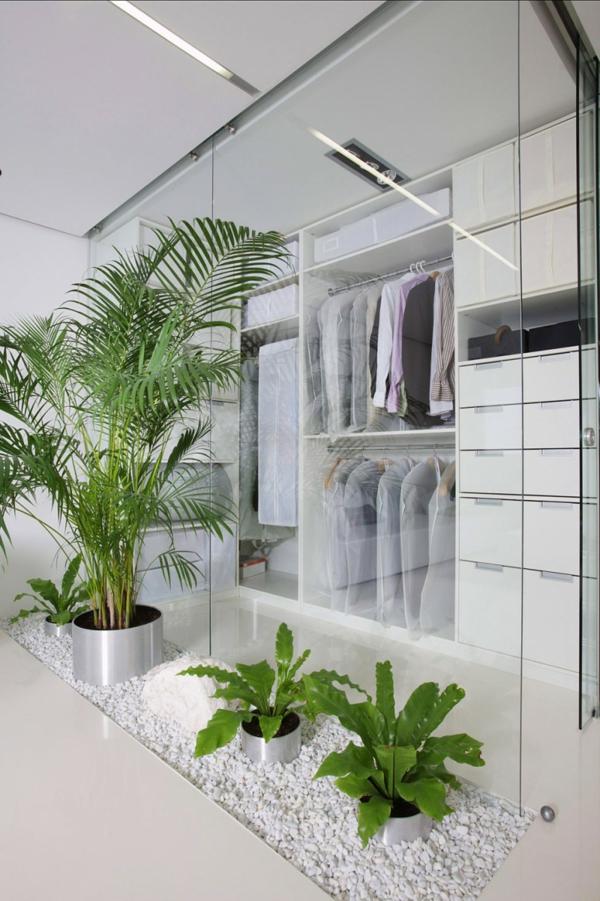 zimmerpflanzen bestimmen weiiße kieselsteine gläserne trennwand