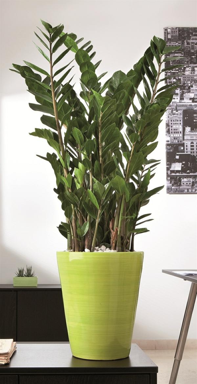 zimmerpflanzen deko ideen hellgrüner blumentopf