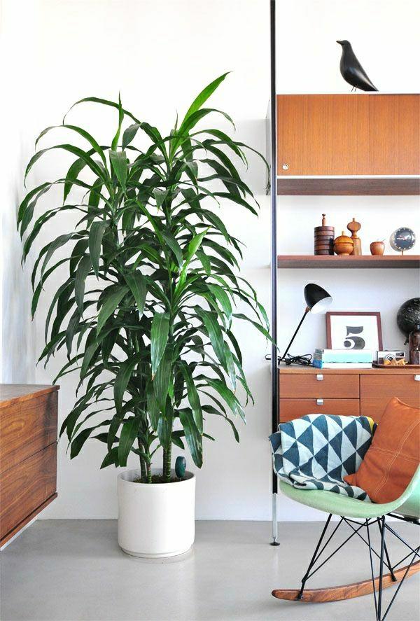 zimmerpflanzen modern schaukelstuhl schöne dekoideen