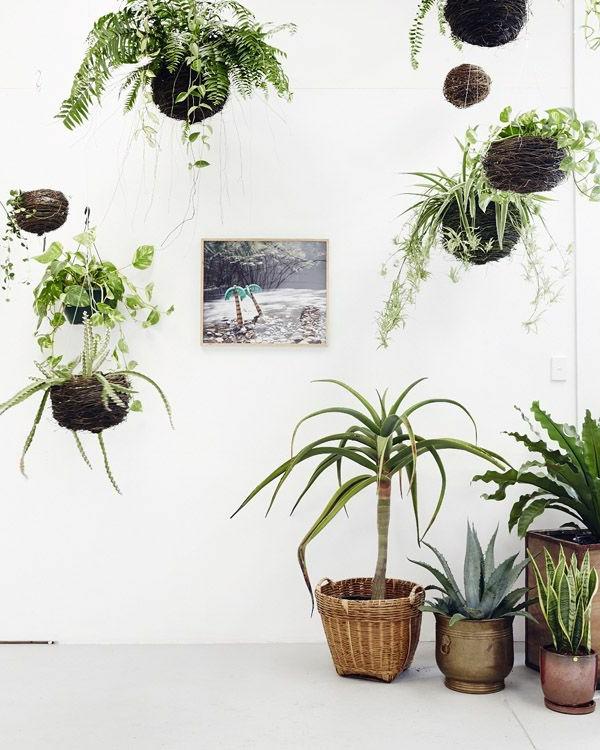 zimmerpflanzen nebeneinander ordnen hängelampeln