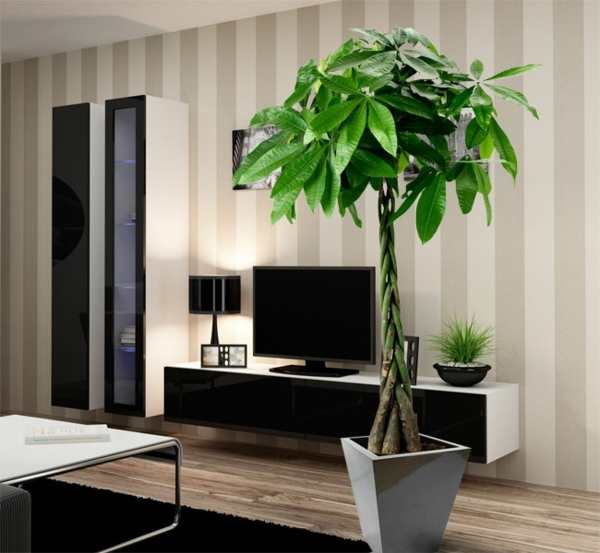 moderne zimmerpflanzen als frische deko f rs zuhause. Black Bedroom Furniture Sets. Home Design Ideas