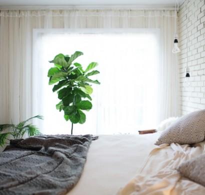 Passende Zimmerpflanzen bestimmen und pflegen