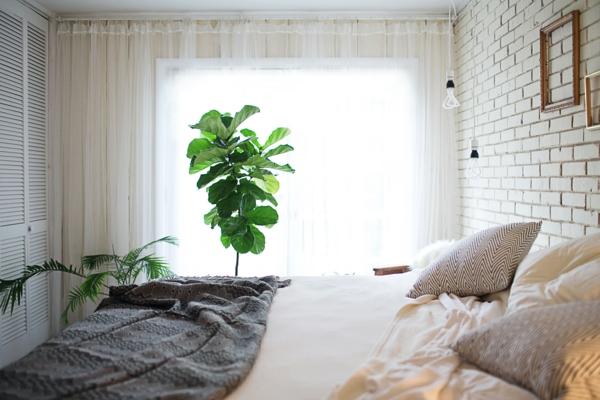 zimmerpflanzen schlafzimmer lange transparente gardinen