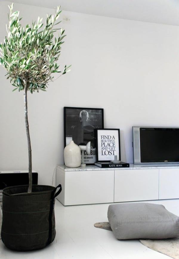 zimmerpflanzen wohnzimmer dkeorieren dekokissen teppich