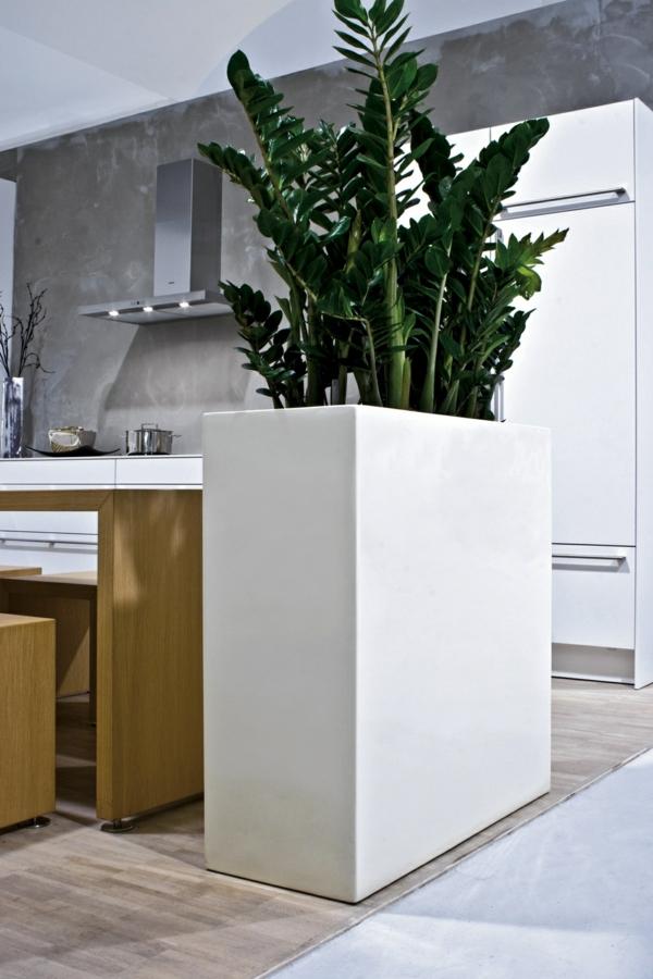 zimmerpflanzen zamioculcas küche dekorieren deko ideen