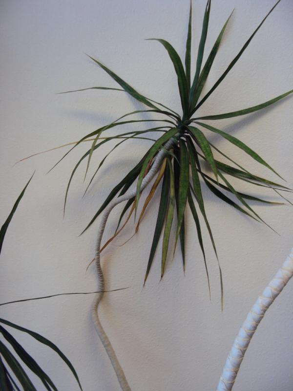 Dracaena Marginata schöne dekoideen zimmerpflanzen
