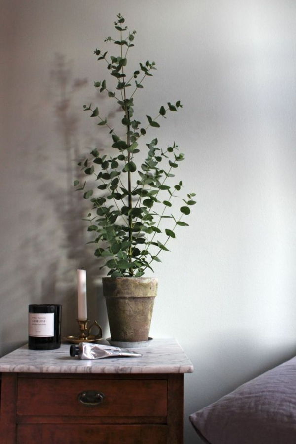 eukalyptus geliebt von koalas und gesund f r menschen. Black Bedroom Furniture Sets. Home Design Ideas