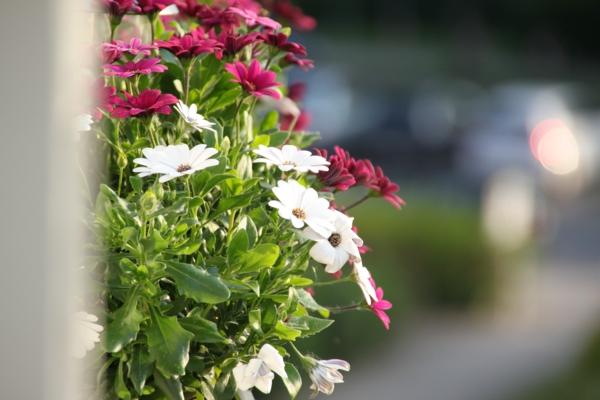 Welche palme fr den balkon: balkon bepflanzen pflanzen pictures to ...