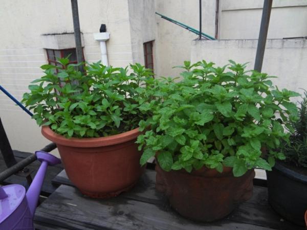 balkon gestalten pflanzen grüne minze pfefferminze