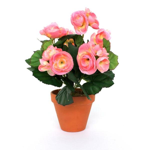 begonien pflege rosa blüten blumentopf