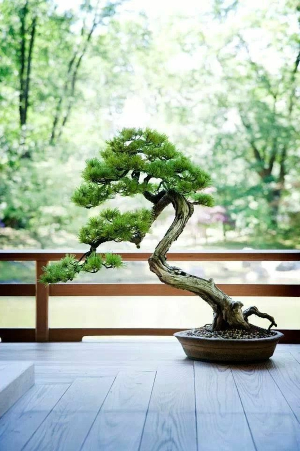 bonsai pflegen bonsai baum pflege tipps bonsai lexikon. Black Bedroom Furniture Sets. Home Design Ideas