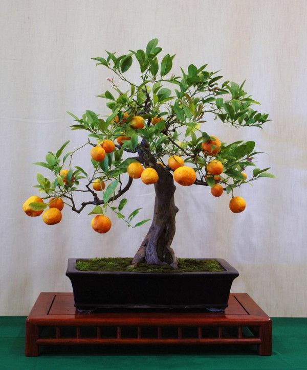 bonsai baum diese ausgefallene pflanze n her kennenlernen. Black Bedroom Furniture Sets. Home Design Ideas