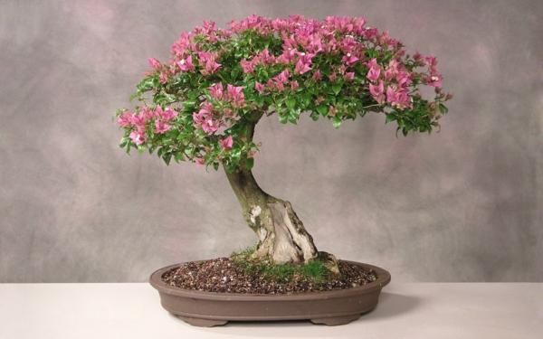 Büsche Mit Blüten. b sche mit weihnachtsstern bl ten euphorbia ...