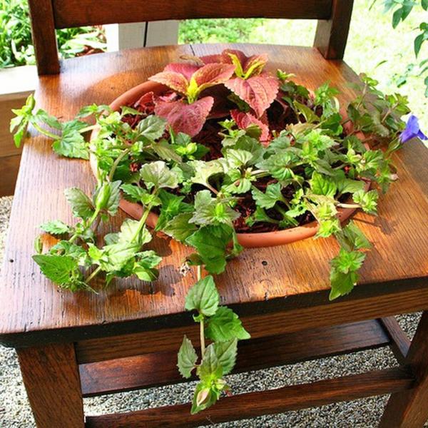 dekoideen garten stuhl loch pflanzen einpflanzen