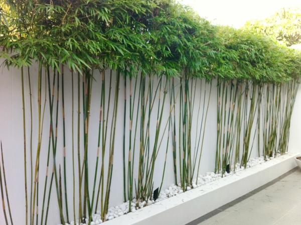 feng shui garten bambus bäumchen weiße steine
