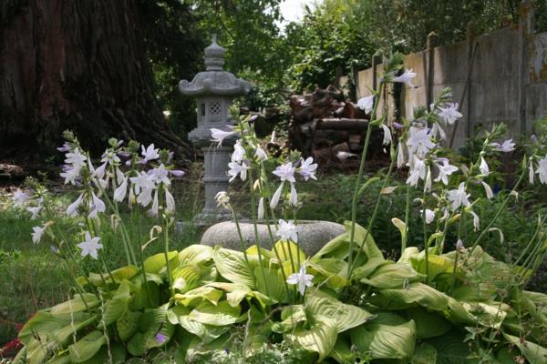 feng shui garten weiße blüten asiatisch
