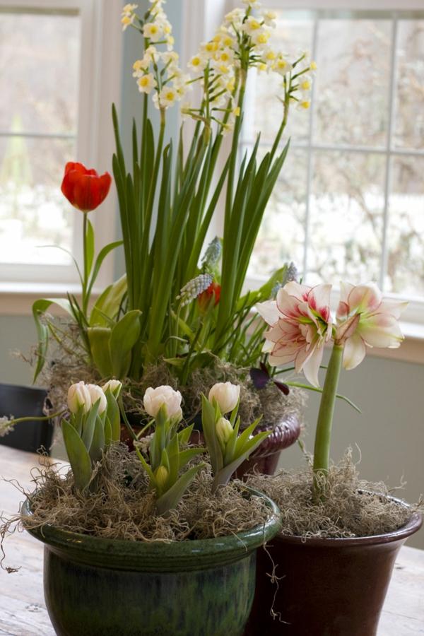 fr hlingsblumen pflanzen balkon raum und m beldesign inspiration. Black Bedroom Furniture Sets. Home Design Ideas