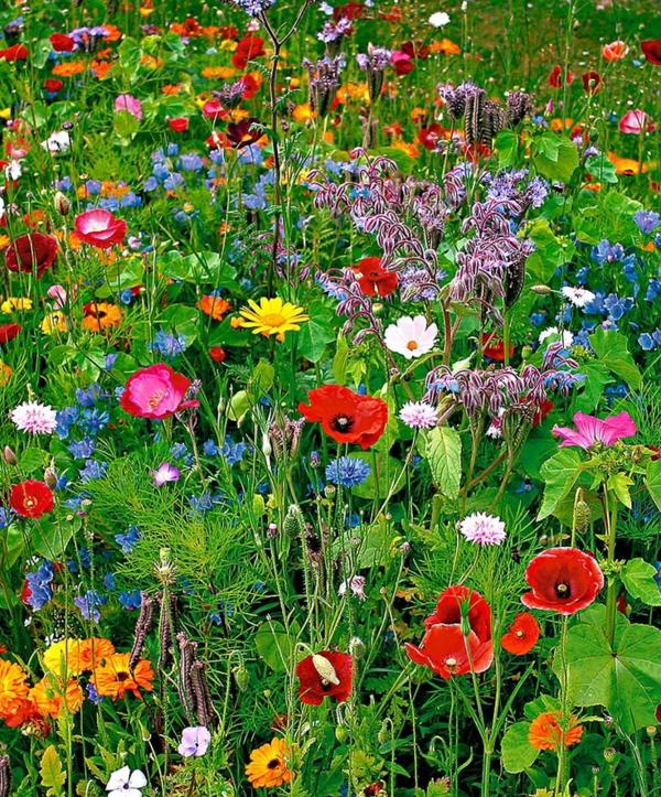 Fr hlingsblumen bilder inspirieren f r ein for Wildflower garden designs