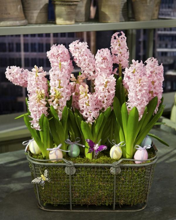 frühlingsblumen hyazinthe balkon gestalten