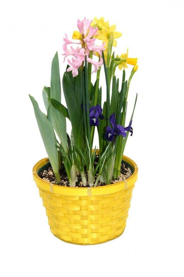 frühlingsblumen hyazinthen gelber blumentopf
