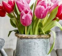 Frühlingsblumen Balkon – Den Balkon durch Frühlingsblumen aufpeppen