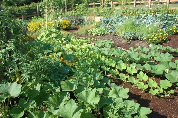 garten gestalten gartenbau pflanzen gemüse