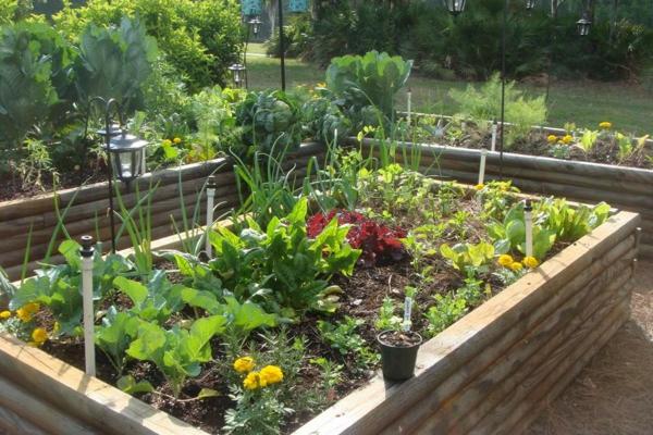garten gestalten pflanzen gemüse gartenbau