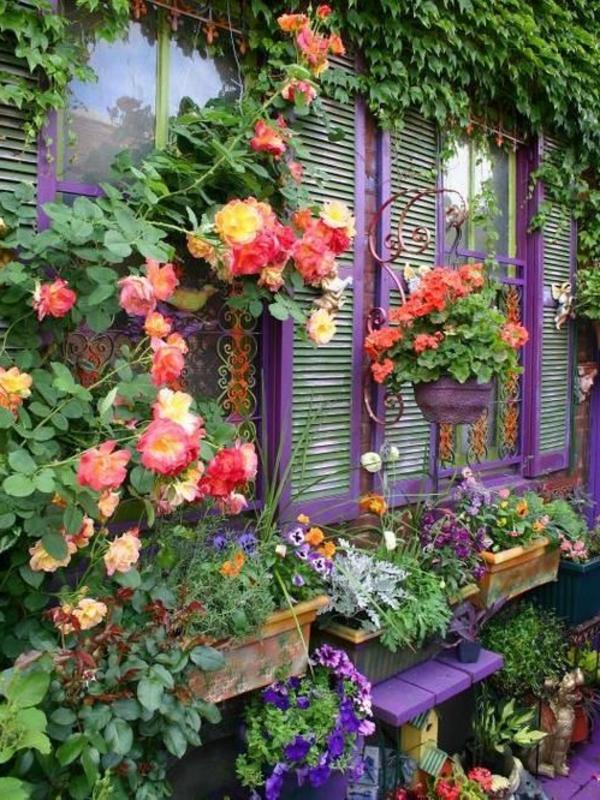 garten pflanzen begonien dekoideen exterieur