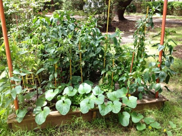 garten pflanzen gartenbau gartengestaltung